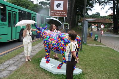 Todas as vacas Passarao foto Cequinel 001