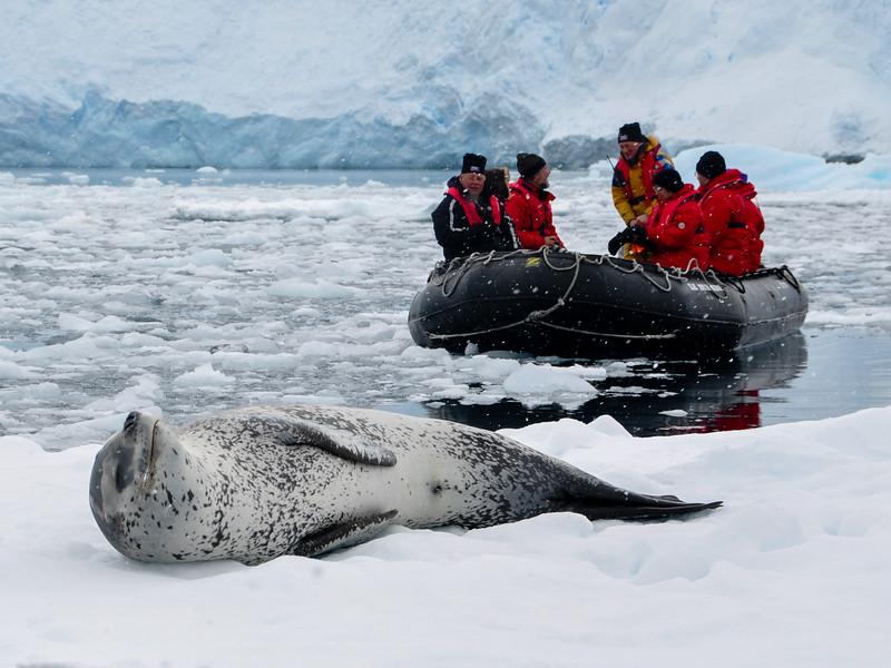 Leopard Seal & Zodiac