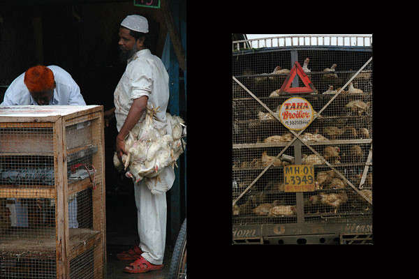 Chicken For Sale at Colaba Market<br /> Mumbai, Maharashtra
