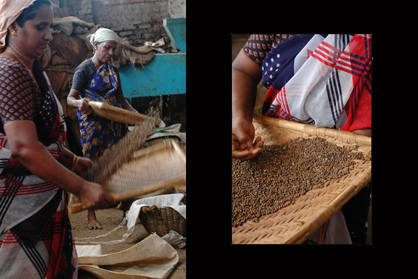 Spice Workers<br /> Jew Town<br /> Fort Kochi, Kerala