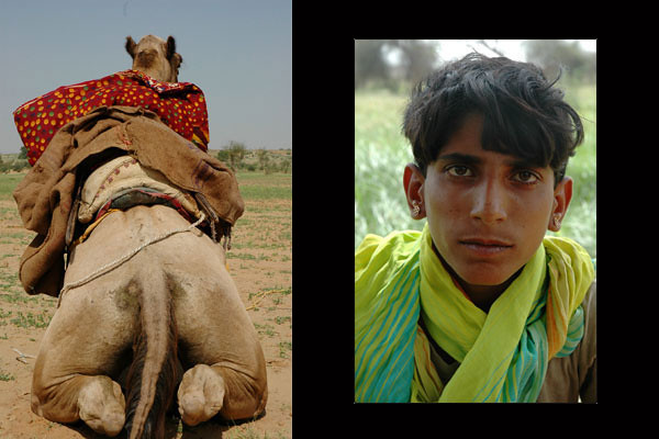 Boy & Camel of the Thar Desert<br /> Rajasthan