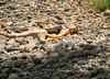Sunbathing on a rocky beach- Dominica.