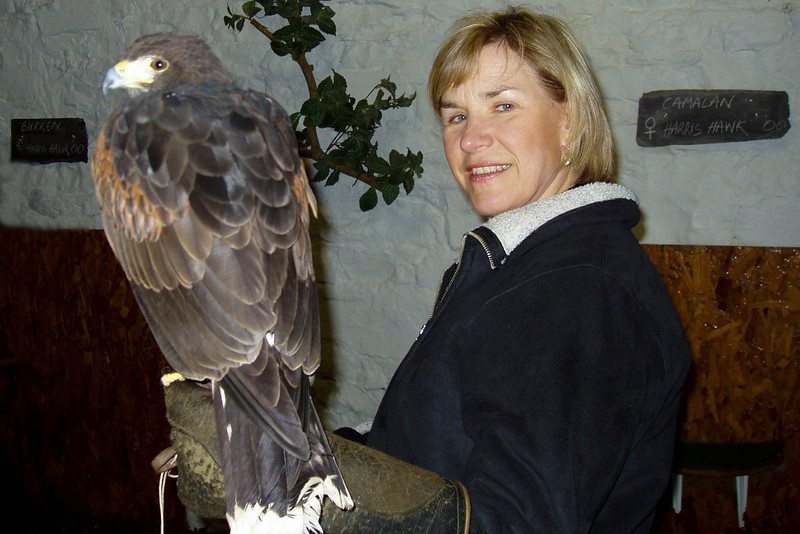 A falconry lesson in Ireland.