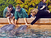 Up-close with dolphins at SeaWorld, Orlando.