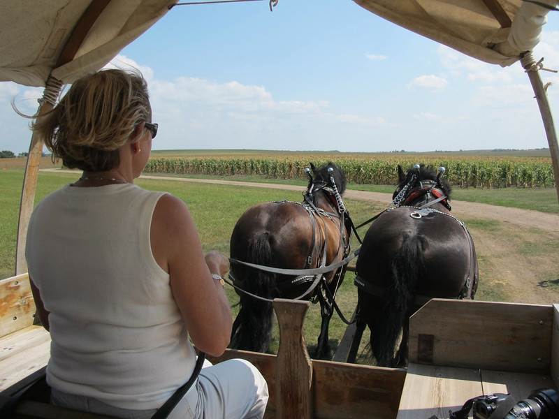 Driving a covered wagon at Laura Ingalls Wilder Homestead in De Smet, South Dakota.