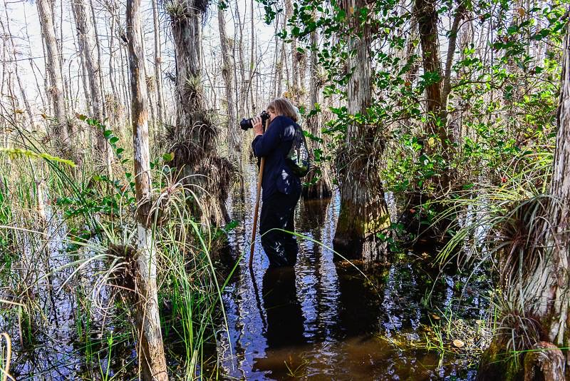 Taking photos on a Swamp Walk in the Everglades.