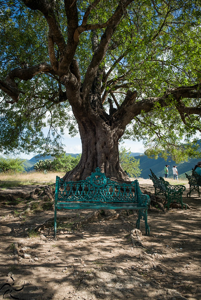 Empty bench under the tree - Oaxaca - Mexico