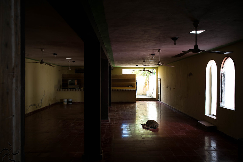 Dog on the empty room - Coba - Mexico