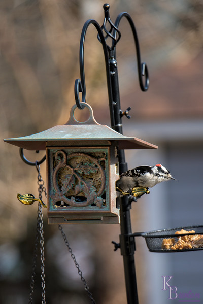 DSC_8915 backyard bird feeder