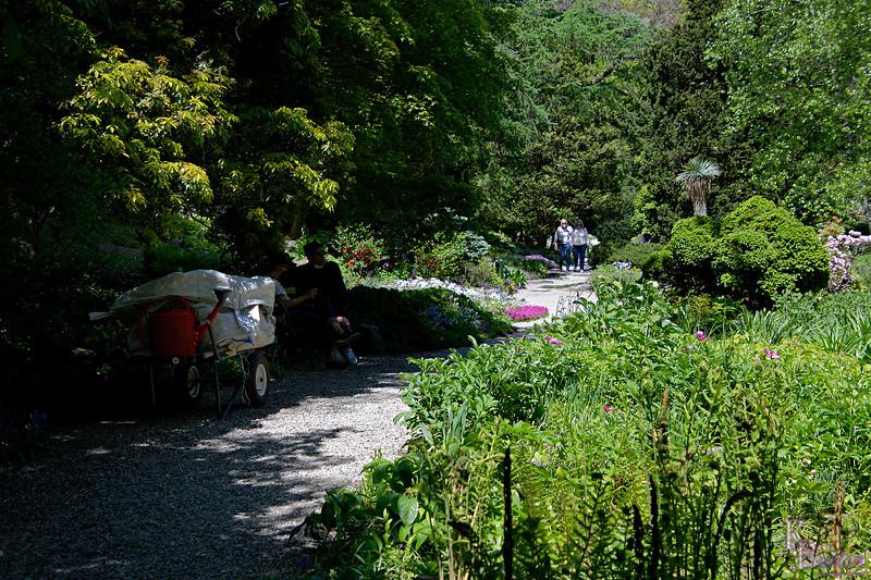 DSC_3394  Rock gardens in the spring_DxO