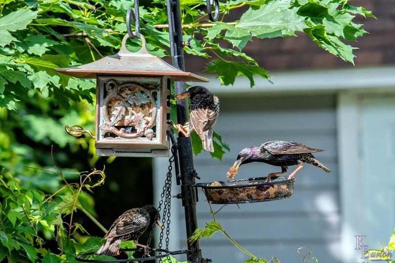DSC_2686 backyard bird feeder