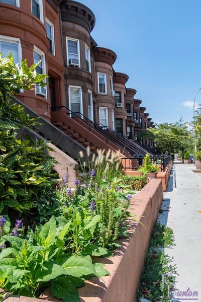 DSC_7296 Brooklyn townhouses