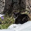 DSC_4677 kitty in the snow
