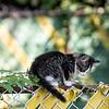 DSC_0911 climbing kitty