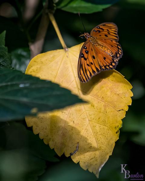 DSC_7416 Butterfly Gardens