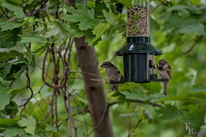 DSC_4366 backyard bird feeders