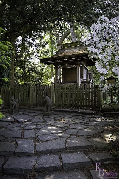 DSC_4651 spring scenes from the Botanical gardens_DxO