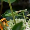 DSC_9903 garden visitor_DxO