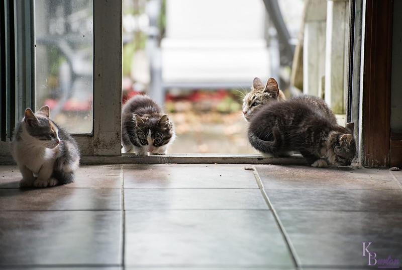 DSC_3723 the three little kittens