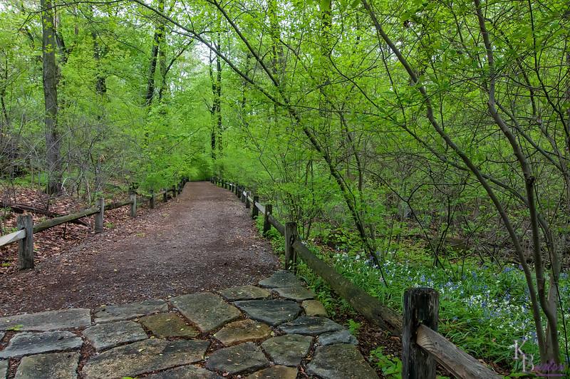 DSC_4225 Spicebush Trail