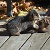 DSC_7944 kitten play