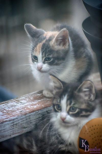 DSC_3537 kittens