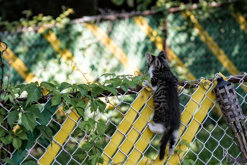 DSC_0906 climbing kitty