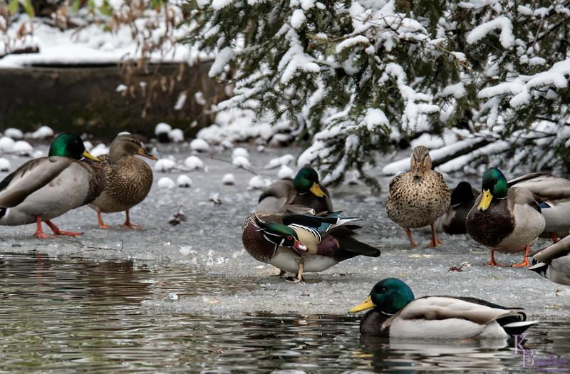 DSC_1123 winter scene at the zoo