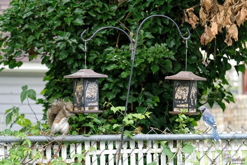 DSC_6234 backyard visitors_DxO