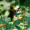 DSC_8804 hummingbirds of Clove lake_DxO