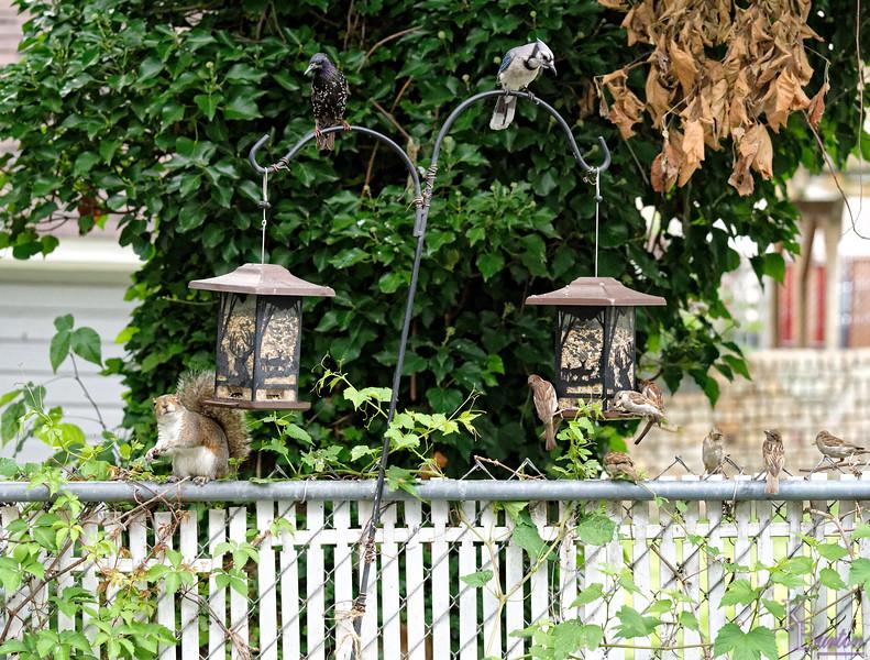 DSC_6295 backyard visitors_DxO