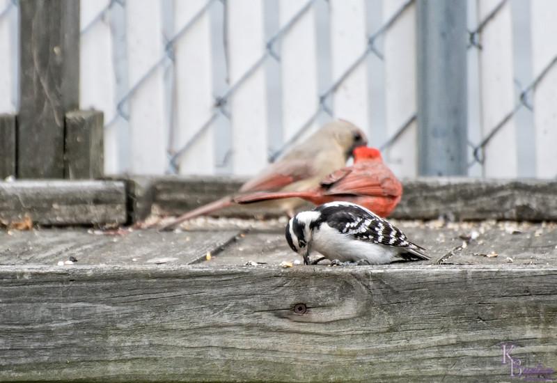 DSC_4439 my backyard