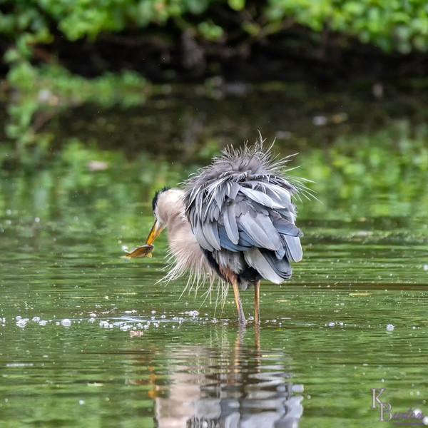 DSC_7627 rainy day at Clove Lakes
