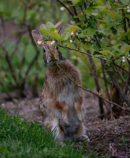 DSC_3890 rabbit