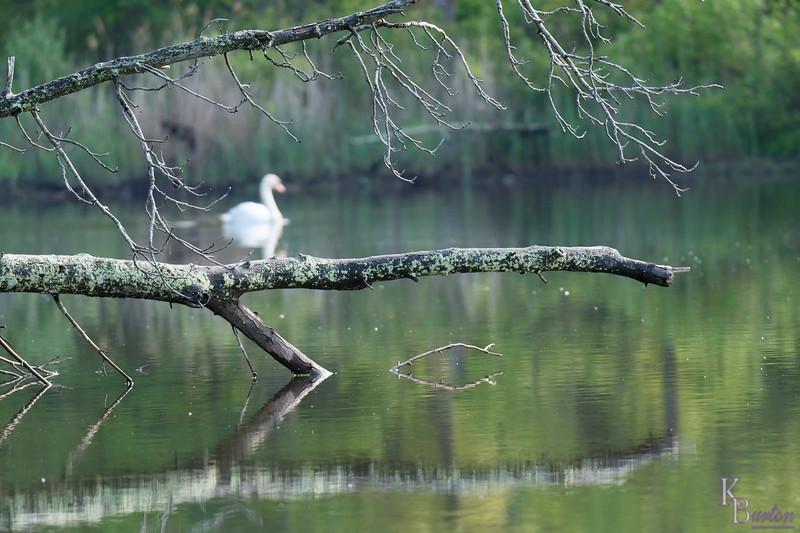 DSC_7552 esrly mornig at Wolfe's pond_DxO