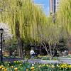 DSC_8489 springtime in BPC_DxO