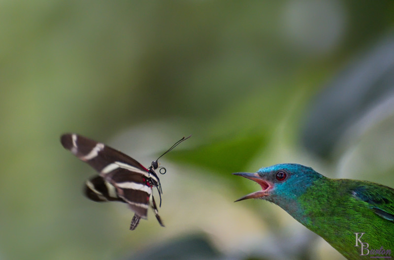 Sparrow sized bully