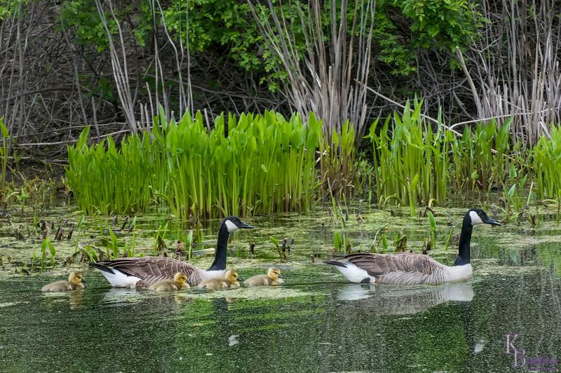 DSC_2930 spring time at Blue Heron pond