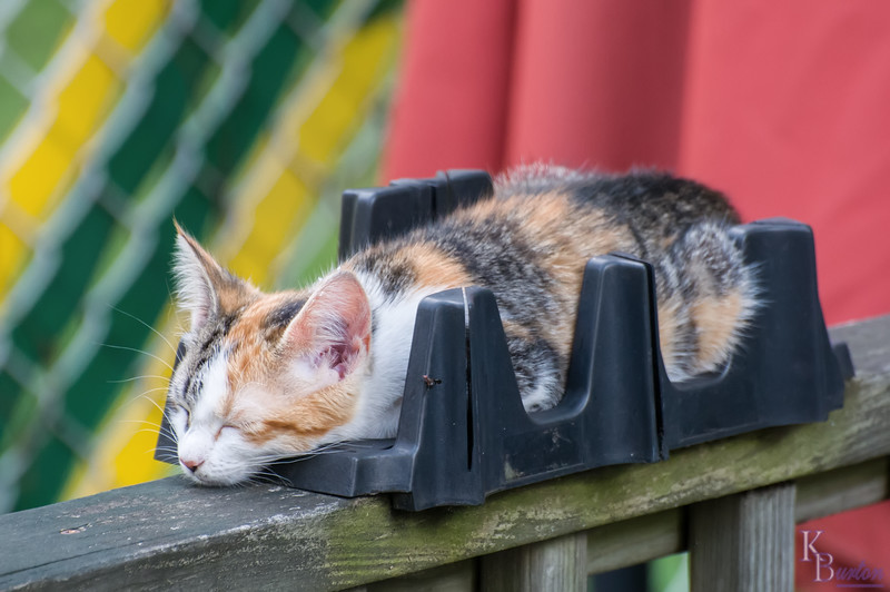 Cats find the darndest places to sleep in.