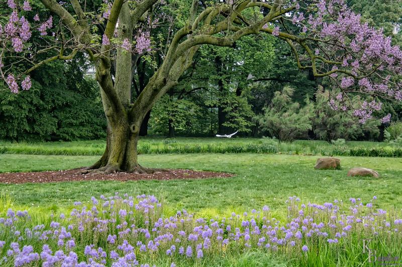 DSC_9745 spring scene at the Boanical Gardens