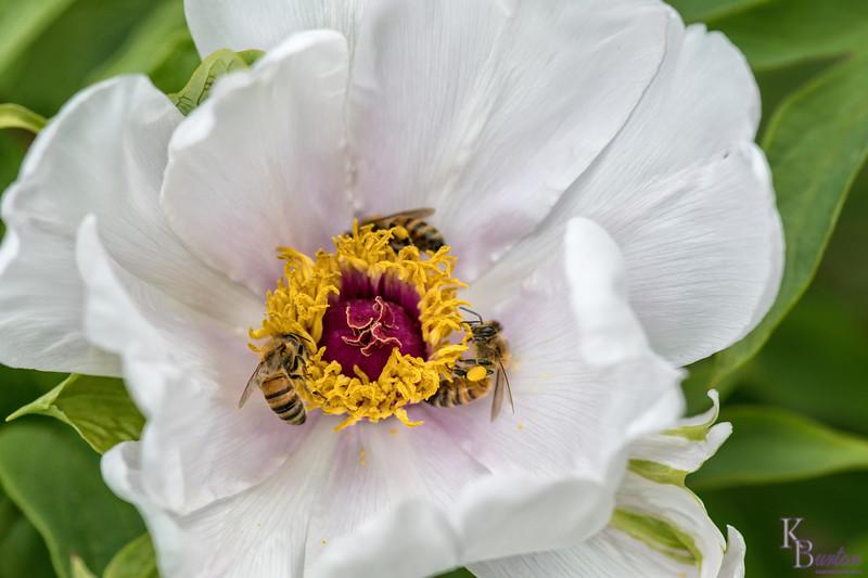 DSC_6641 honey bees