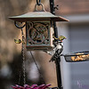 DSC_8927 backyard bird feeder