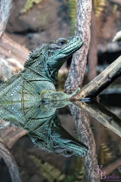 DSC_1915 wster dragon