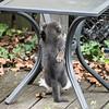 DSC_6021 kitten play