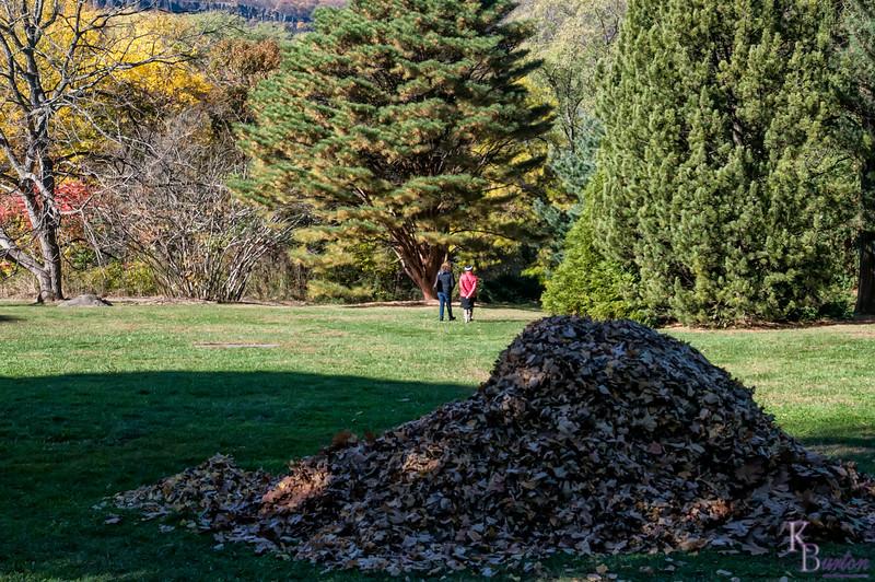 DSC_9162 fall scenes from Wave Hill