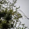 DSC_8075 soaring high
