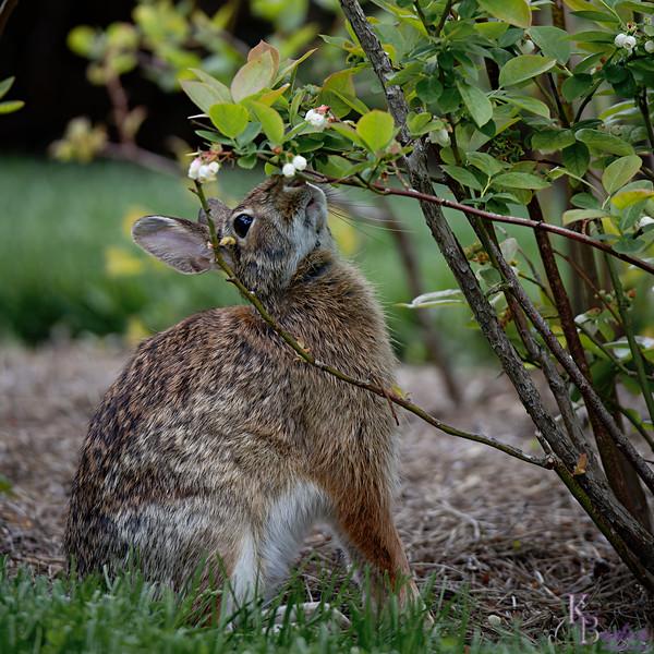DSC_3930 rabbit_DxO
