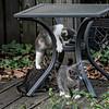 DSC_7274 kitten play