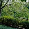 DSC_8184 spring time at the Botanical gardens