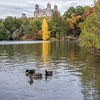DSC_7581 fall scenes from Central Park